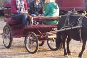 Kutsche, Ponykutsche, Shetty-
