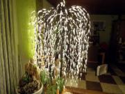 Led Lichterbaum Weide