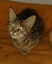 Katzen in Ingolstadt - kaufen und verkaufen bei Quoka.de
