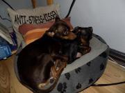 Lilly und Charly