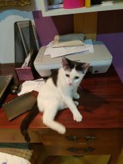 MANU: Lebensfrohes Katzenkind
