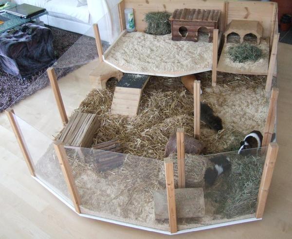 meerschweinchen pension bahlingen tierbetreuung kaufen. Black Bedroom Furniture Sets. Home Design Ideas