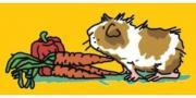 Meerschweinchenhilfe e.V. -