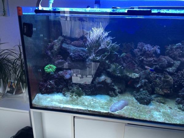 meerwasser aquarium komplett in freckenfeld fische. Black Bedroom Furniture Sets. Home Design Ideas