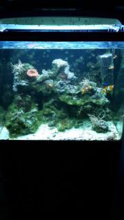 Meerwasser Aquarium mit