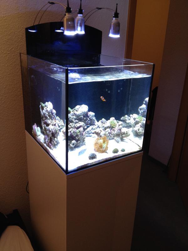 meerwasser nano aquarium 80l wie neu komplettpaket inkl besatz zubeh r technik in. Black Bedroom Furniture Sets. Home Design Ideas