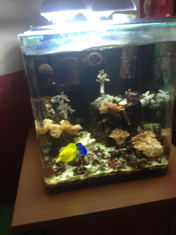 meerwasseraquarium unterschrank neu und gebraucht kaufen. Black Bedroom Furniture Sets. Home Design Ideas