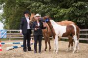 Paint Horse Hengstfohlen
