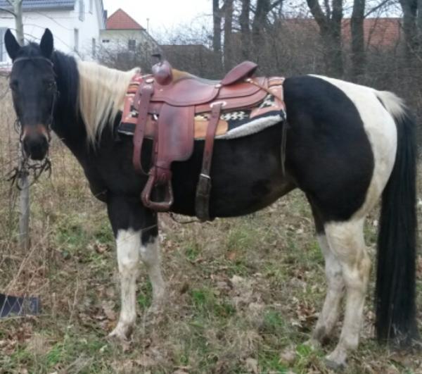 painthorse stute zu verkaufen in adelsdorf pferde kaufen. Black Bedroom Furniture Sets. Home Design Ideas