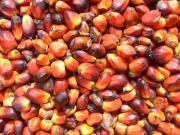 Palmöl Sonnenblumenöl Rapsöl