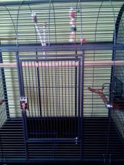 Papagay oder Vogel
