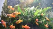 Papageien Platy, Back