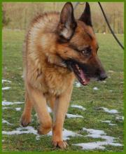 Patenhund: Beppo, 10