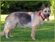 Patenhund: Blondigirl, 10
