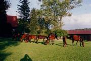 Pferdeboxen für Selbstversorger