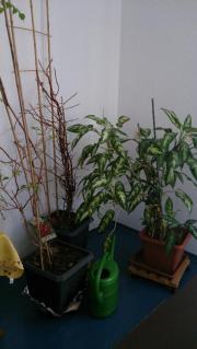 Pflanzen diverse