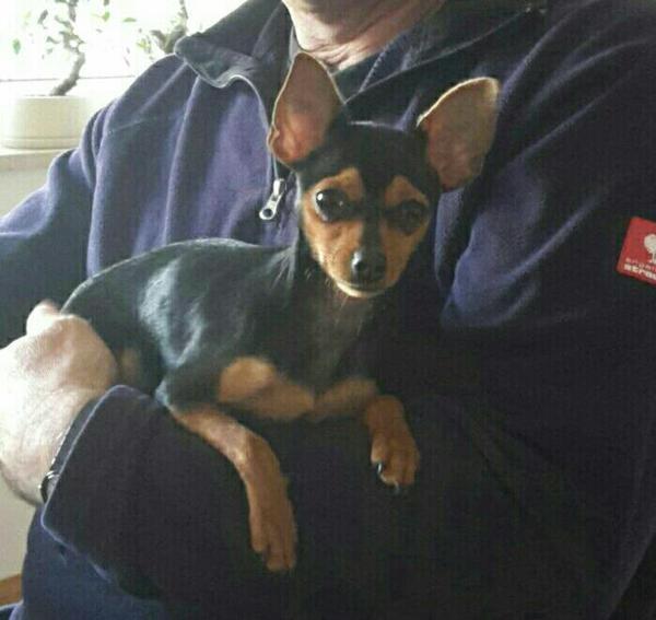 Prager Rattler In Abensberg Hunde Kaufen Und Verkaufen