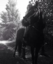 Reitbeteiligung auf Pferd/