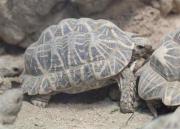 Schildkröten verfügbar