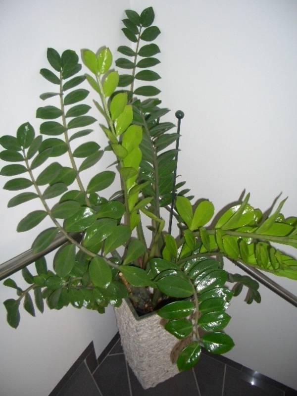 Blumen in nanopics zimmerpflanzen foto - Robuste zimmerpflanze ...