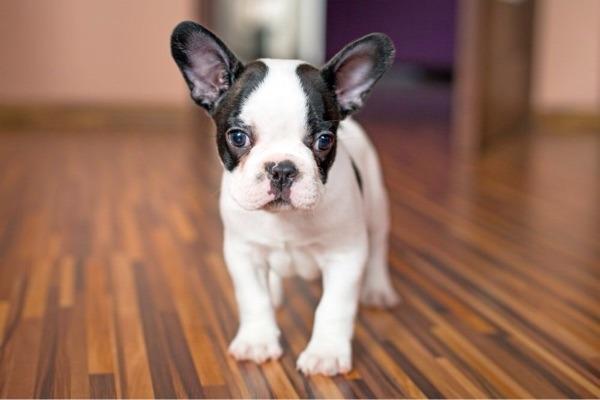 suche einen hund in k ln hunde kaufen und verkaufen ber private kleinanzeigen. Black Bedroom Furniture Sets. Home Design Ideas