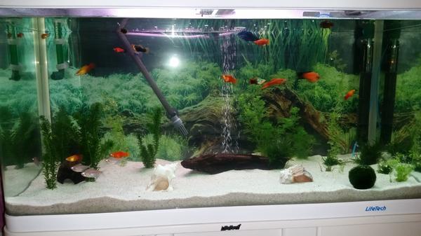 Fische verschenke neu und gebraucht kaufen bei for Suche zierfische
