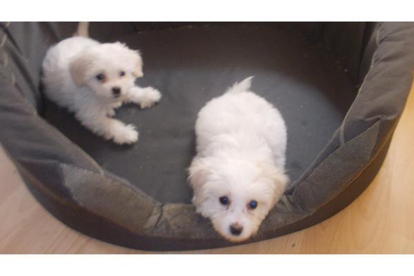 süße hunde babys