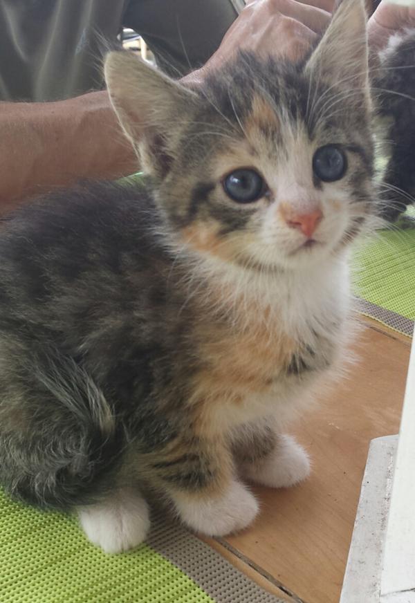 anzeigen kostenlos chats ab 18