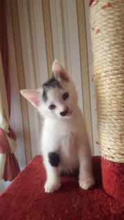 Süsse Katzenkinder suchen