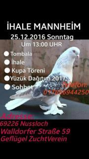 Tauben Versteigerung Güvercin