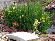 Teich- und Gartenpflanzen
