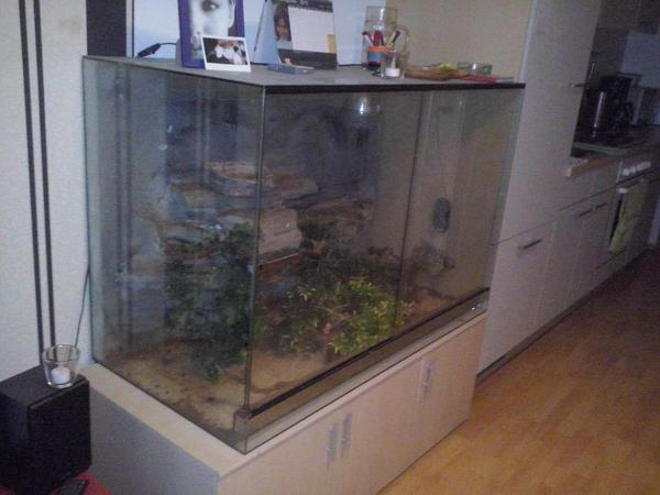 terrarium komplett reptilien terraristik. Black Bedroom Furniture Sets. Home Design Ideas