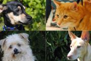 Tierbesitzer Aufgepasst Reihenhaus
