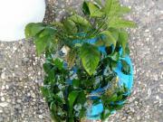 Verkaufe Aquarium Pflanzen