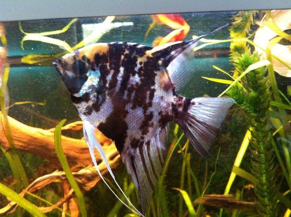 aquarium fische zubeh r in k ln kaufen bei deine. Black Bedroom Furniture Sets. Home Design Ideas