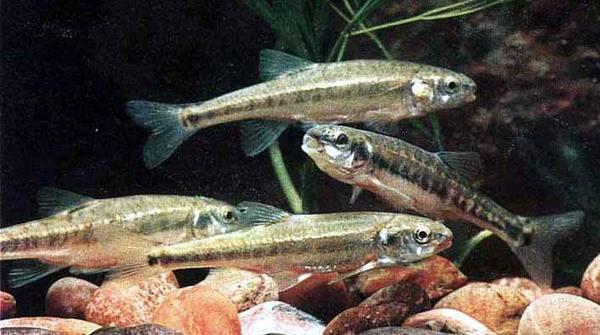 Forellen kleinanzeigen aquarium fische zubeh r for Kleine teichfische