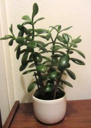 Versch. Zimmerpflanzen zu