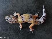verschiedene Leopardgecko NZ