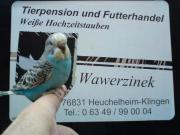 Vogelbörse in Haguenau/