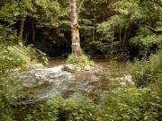 Wasser - Mühle in