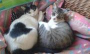 Ylenia und Lilly,