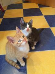 Zuckersüße Kätzchen suchen
