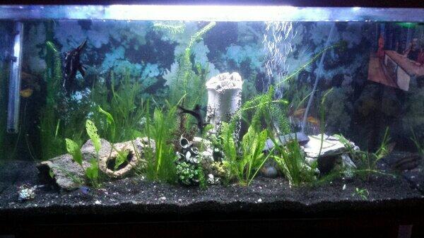 200l Aquarium - Stein - Zierfisch, Aquarium,Aquariumpflanzen,Aquariumzubehör,Außenfilter,Fischfutter,Wasserpflege,Sonstige Aquaristik. - Stein
