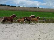 3 Pferdeboxen frei