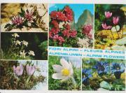 5 Ansichtskarten Alpenblumen