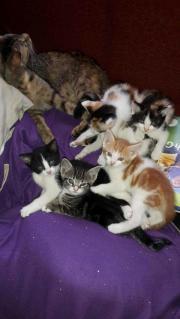 5 Katzenkinder, 6