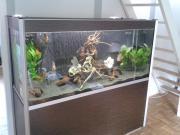 500L-Designer-Aquarium (