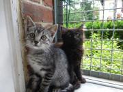 8 Kitten vergnügt