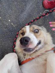Amadeus - Kuschelhund, ca.