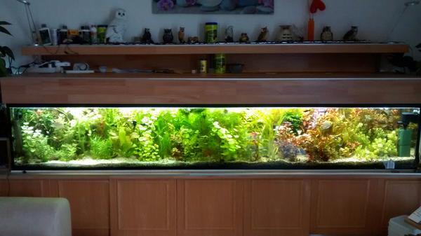 gefl kleinanzeigen aquaristik kaufen verkaufen bei deinetierwelt. Black Bedroom Furniture Sets. Home Design Ideas